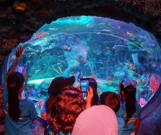 Akuarium interaktif SEA LIFE Malaysia kini dibuka di Legoland!